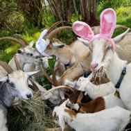Spring feast.